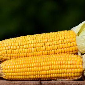 corn-2691456_1920