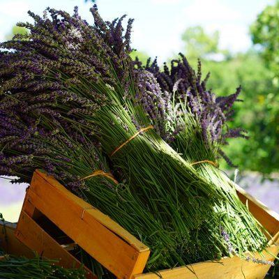 lavender-1595608_960_720