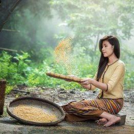 rice-1807554_960_720